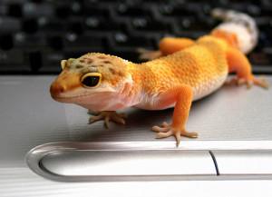Leopard Gecko Caresheet