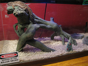 leopard gecko housing
