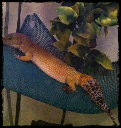 Sly laying in hammock