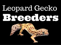5 Top Leopard Gecko Breeders