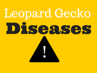 Common Leopard Gecko Diseases?
