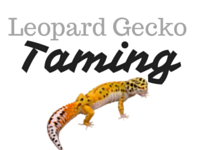 Tame Your Leopard Gecko – Step By Step Guide