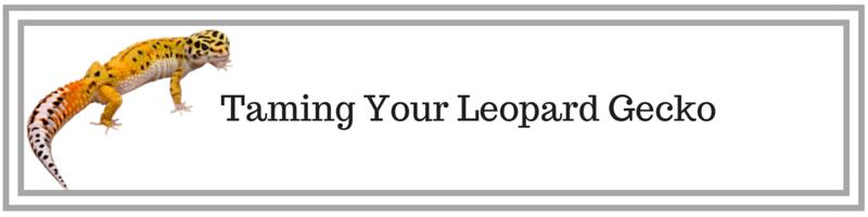 Tame Leopard Gecko