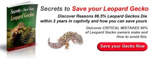 leopard gecko ad